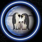 16 сентября – Международный день защиты озонового слоя Земли